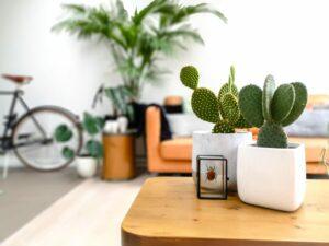 petits cactus plantes d'intérieur