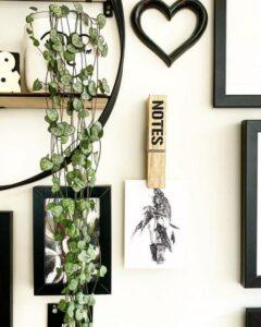 plantes vertes descendantes Ceropegia étagère murale
